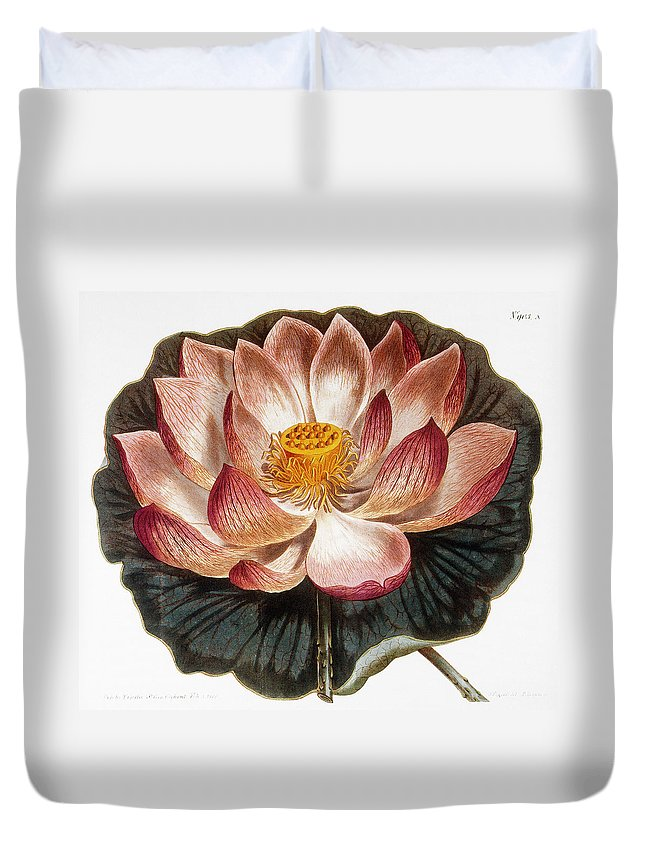 1806 Duvet Cover featuring the photograph Water Lily, 1806 by Granger