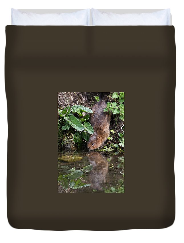 Water Vole Duvet Cover featuring the photograph Water Vole by Bob Kemp