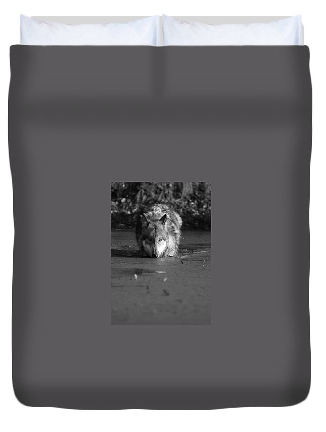 Wolf Wolves Lupine Canis Lupis Animal Wildlife Photograph Photography Duvet Cover featuring the photograph Water Wolf I by Shari Jardina