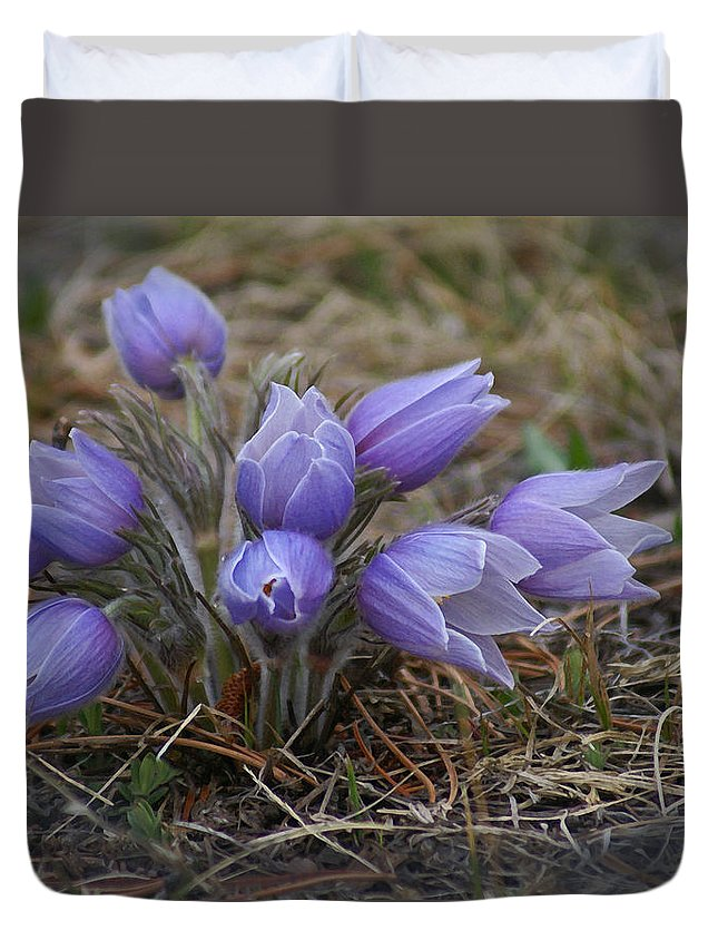 Pasque Flower Duvet Cover featuring the photograph Watercolor Pasque Flowers by Heather Coen
