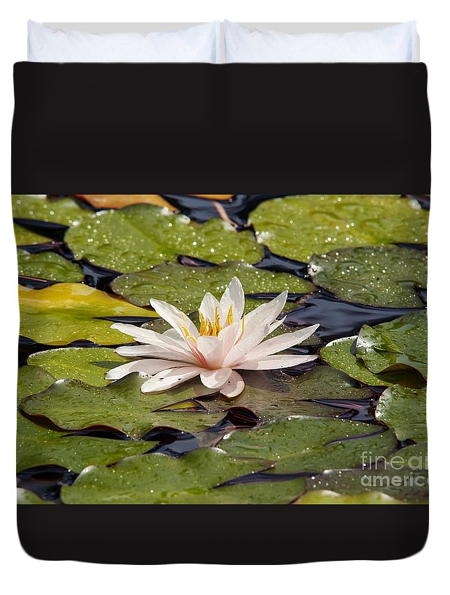 Lily Duvet Cover featuring the photograph Waterlily On The Water by Michal Boubin