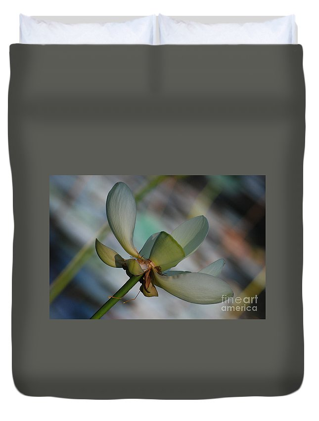 Botanical Duvet Cover featuring the photograph Waterlily Wash Peekaboo by Heather Kirk
