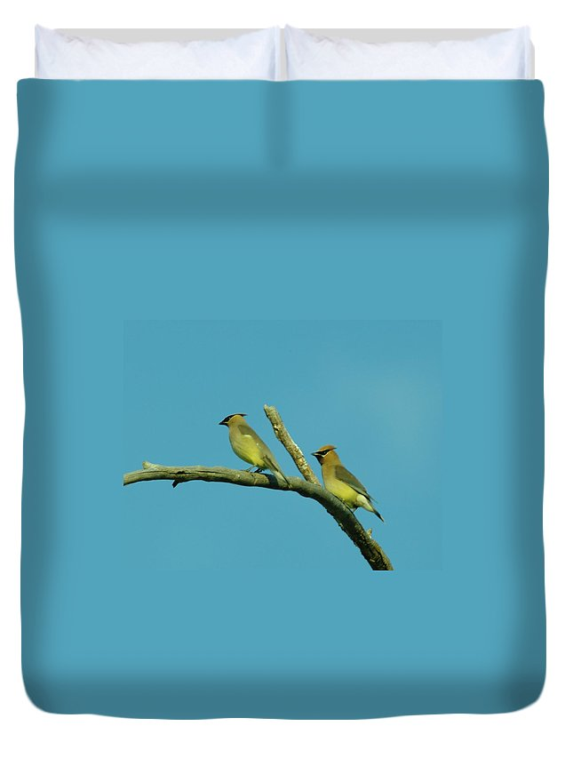 Birds Duvet Cover featuring the photograph Wax Wings by Jeff Swan