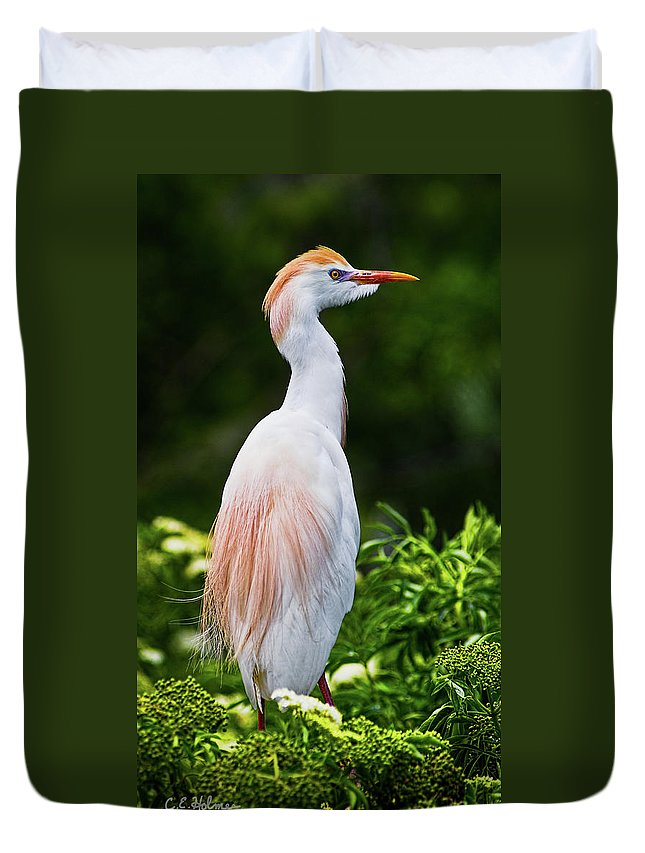 Cattle Egret Duvet Cover featuring the photograph Wearing Spring Colors by Christopher Holmes