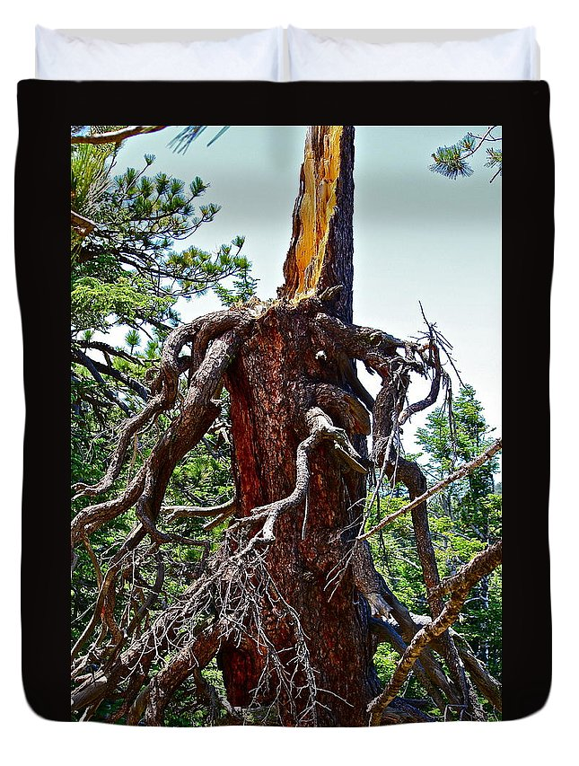 Tree Duvet Cover featuring the photograph Weather Beaten by Diana Hatcher