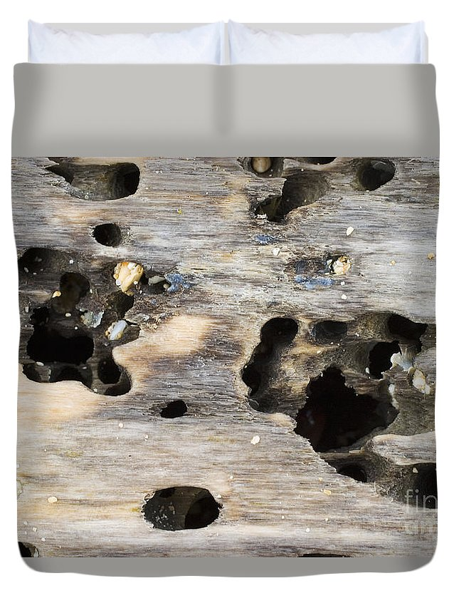 Background Duvet Cover featuring the photograph Weathered Driftwood by Tomas del Amo - Printscapes