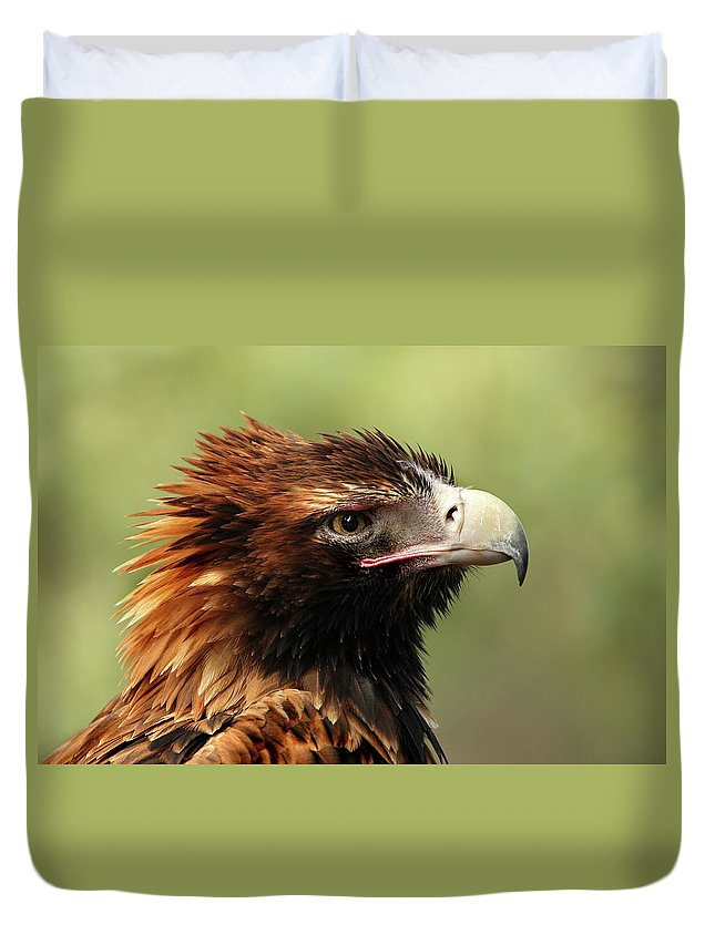 Wedgetail Duvet Cover featuring the photograph Wedge-tailed Eagle by Marion Cullen