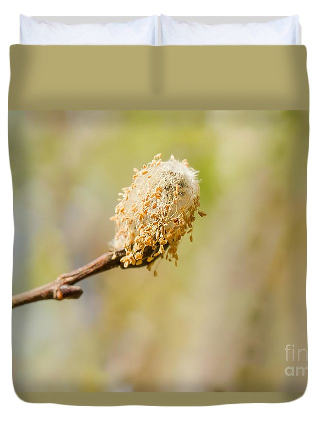 Weeping Willow Duvet Cover featuring the photograph Weeping Willow Seed by Nikki Vig