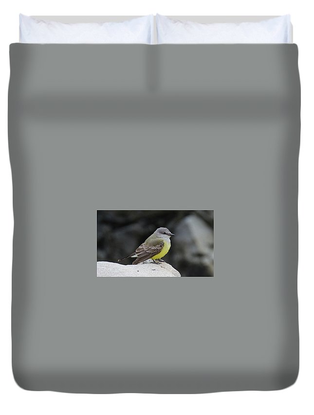 Kingbird Duvet Cover featuring the photograph Western Kingbird by Judd Nathan