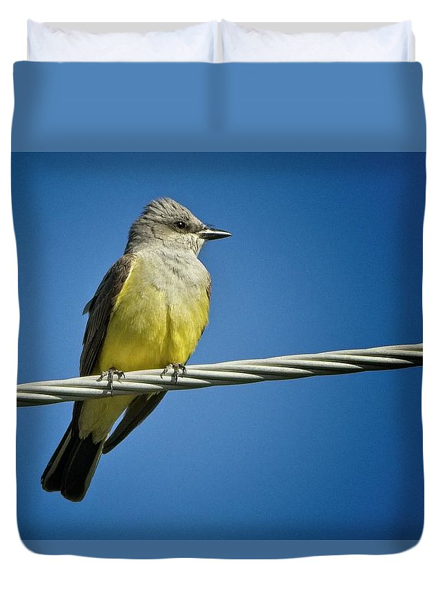 Quail Hollow Park Duvet Cover featuring the photograph Western Kingbird by Rick Graham