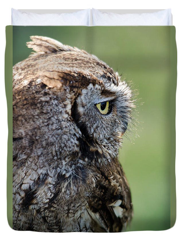 Owl Duvet Cover featuring the photograph Western Screech Owl by Steev Stamford