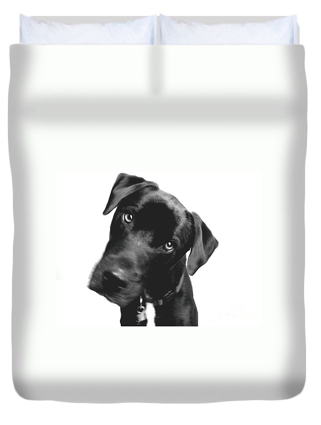 Labrador Duvet Cover featuring the photograph What by Amanda Barcon