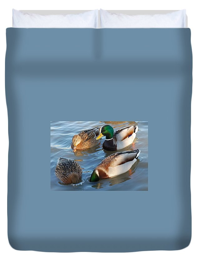 Duck Duvet Cover featuring the photograph What Are They Going On? by Yuri Hope