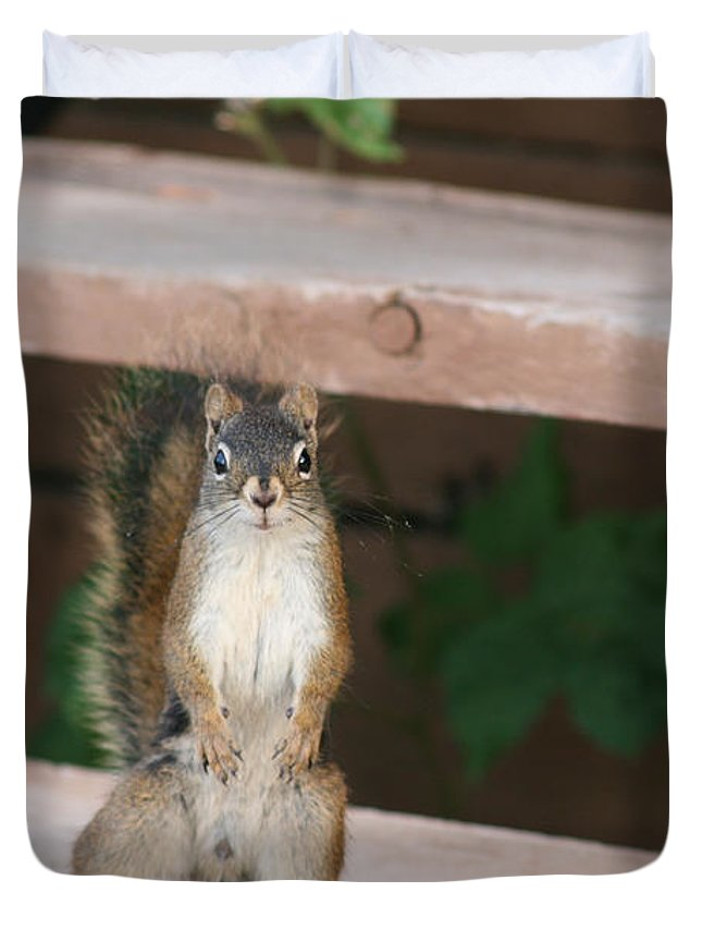 Squirrel Mother Nature Wild Animal Cute Dancing Duvet Cover featuring the photograph What You Lookin At by Andrea Lawrence