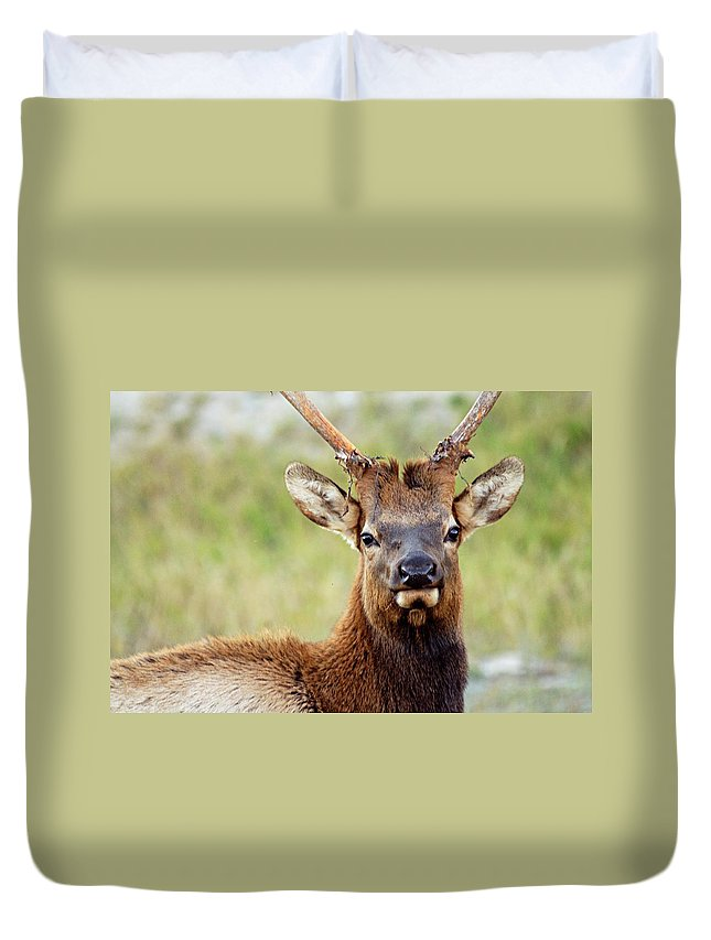 Bull Elk Duvet Cover featuring the photograph Whatcha Looking At by Larry Ricker