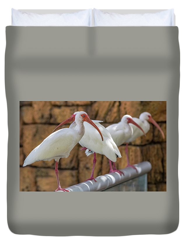 Albus Duvet Cover featuring the mixed media Whats For Lunch by Capt Gerry Hare