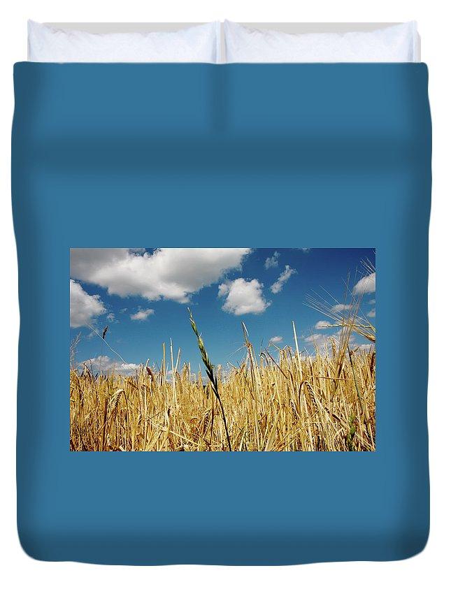 Rudesheim Duvet Cover featuring the photograph Wheat On The Rhine by KG Thienemann