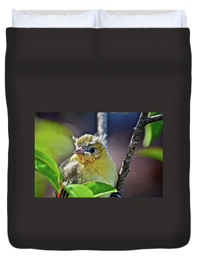 Bird Duvet Cover featuring the photograph Where Am I by Diana Hatcher