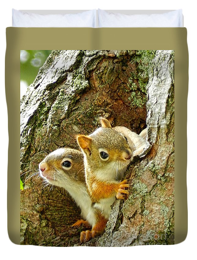 Red Squirrel Duvet Cover featuring the photograph Where's Mom by Carol A Commins