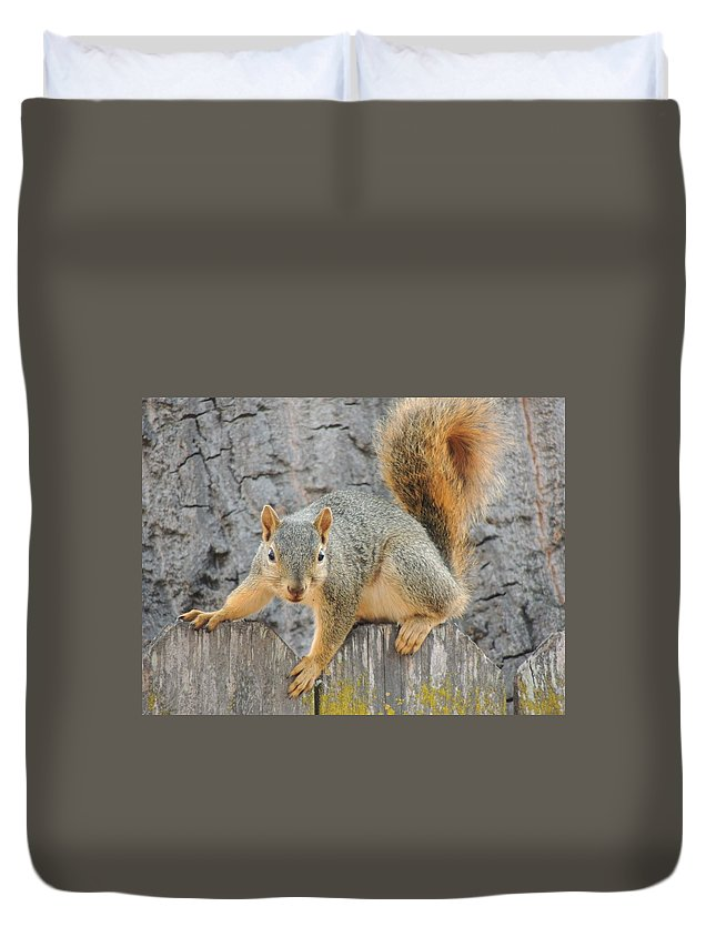 Deer Duvet Cover featuring the photograph Where's The Nuts? by Traci Hallstrom