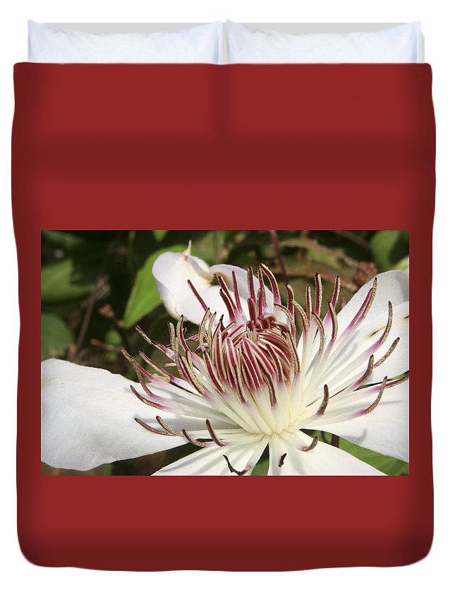 Clematis Duvet Cover featuring the photograph White Clematis Henryi by Margie Wildblood