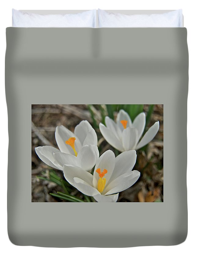 Crocus Duvet Cover featuring the photograph White Croci by Michael Peychich