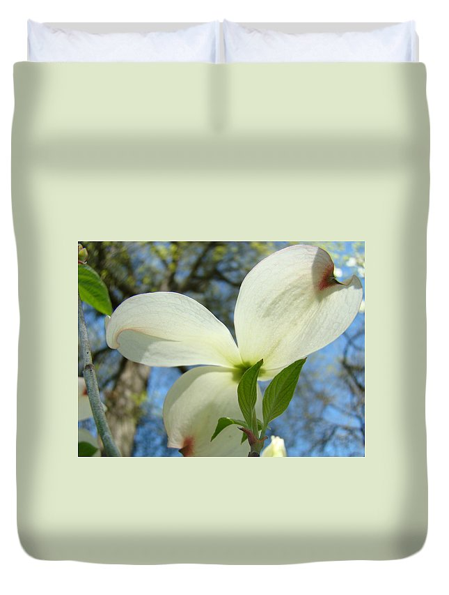 Giclee Art Print Duvet Cover featuring the photograph White Dogwood Flower Art Prints Blue Sky Baslee Troutman by Baslee Troutman
