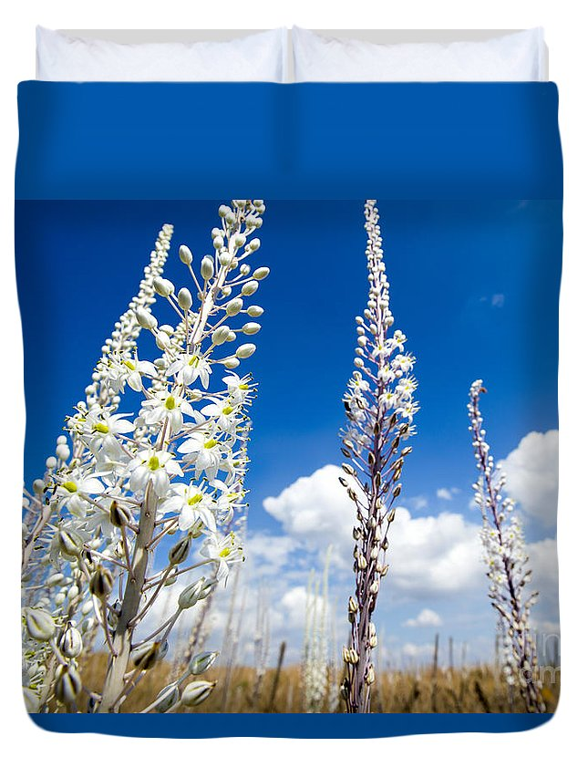 Freshness Duvet Cover featuring the photograph White Flowering Sea Squill On A Blue Sky by Alon Meir