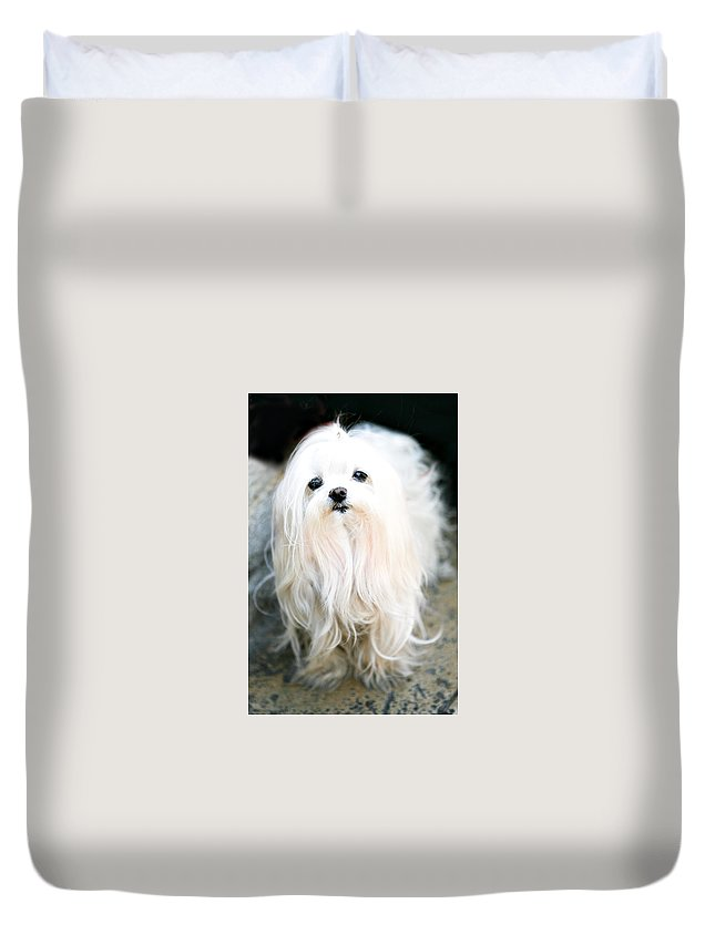 Small Duvet Cover featuring the photograph White Fluff by Marilyn Hunt