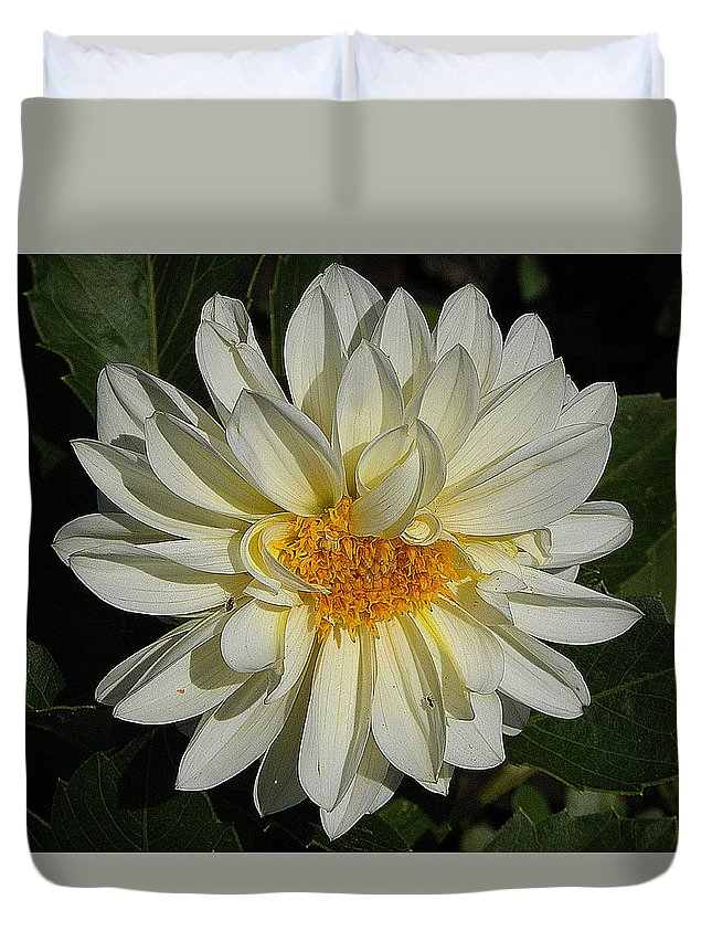 White Gerbera Duvet Cover featuring the photograph White Gerbera by Vineta Marinovic