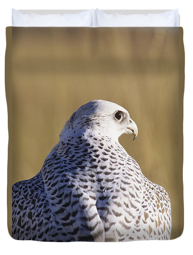 Animal Art Duvet Cover featuring the photograph White Gyrfalcon by John Hyde - Printscapes