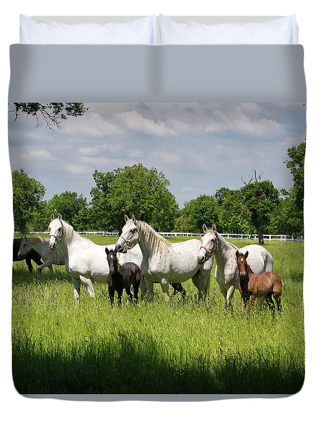 Herd Duvet Cover featuring the photograph White Lipizzaner Mares Horse Breed With Dark Foals Grazing In A by Reimar Gaertner