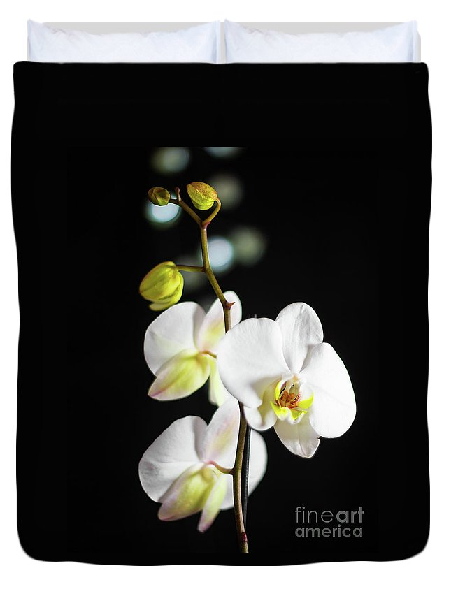 White Duvet Cover featuring the photograph White Orchid On Black Bw by Alex Art and Photo