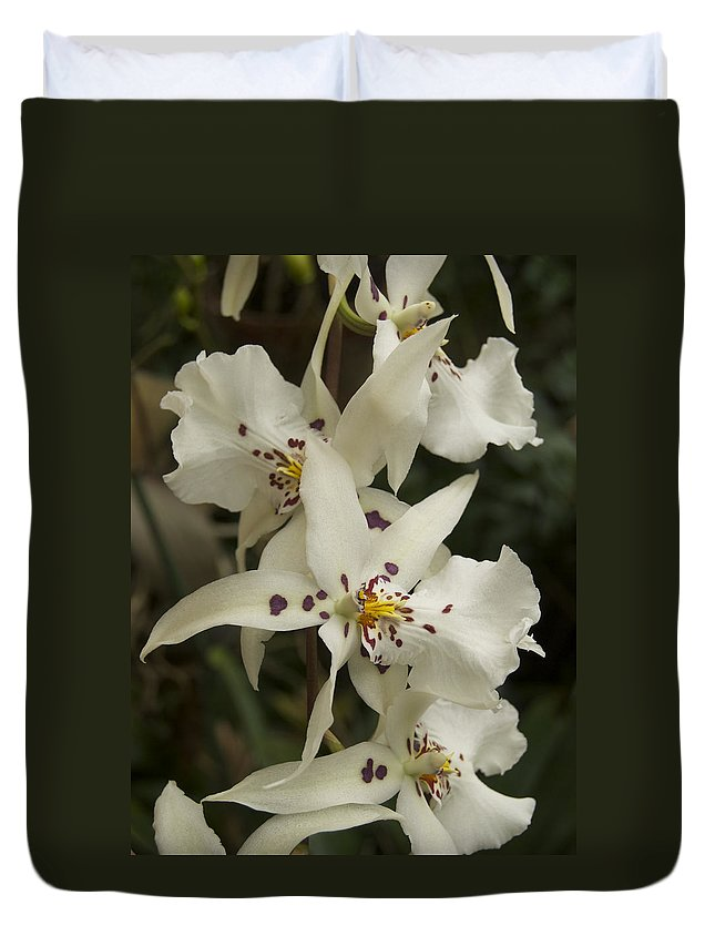 White Duvet Cover featuring the photograph White Orchids 2 by Michael Peychich