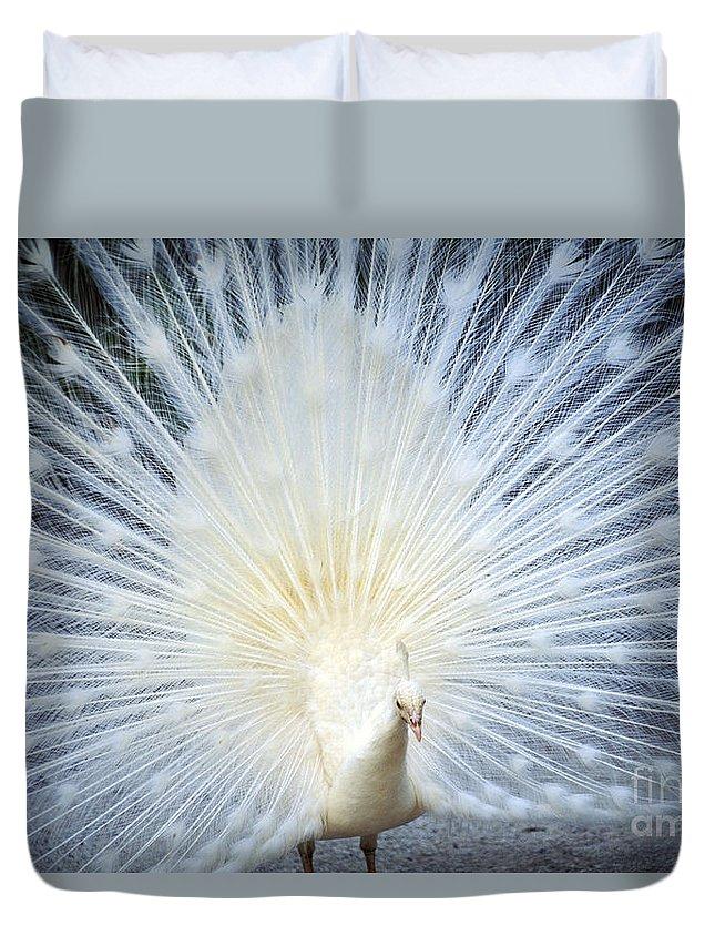 Albino Duvet Cover featuring the photograph White Peacock by Rita Ariyoshi - Printscapes