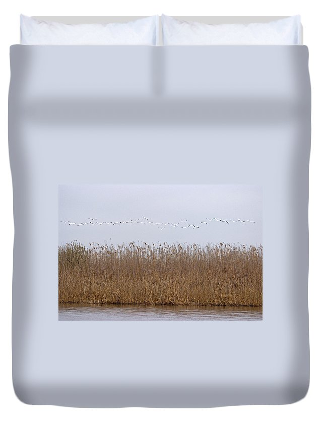 White Pelicans On Lake Duvet Cover featuring the photograph White Pelicans Fly Over Reed Bed On Lake by Cliff Norton