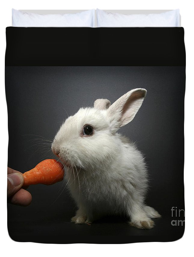 White Duvet Cover featuring the photograph White Rabbit by Yedidya yos mizrachi