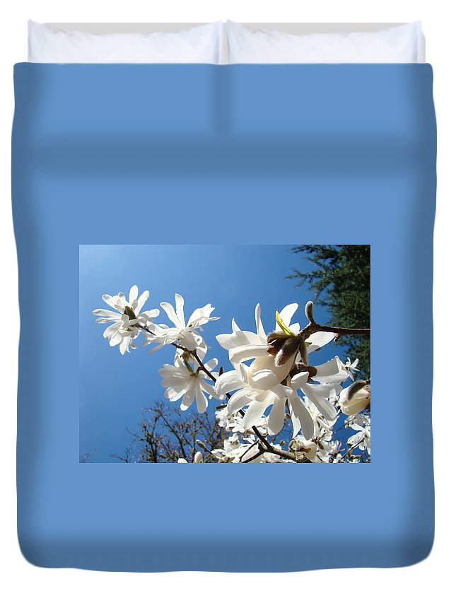 Magnolia Duvet Cover featuring the photograph White Tree Flowers Art Prints Magnolia Blue Sky Floral Baslee Troutman by Baslee Troutman