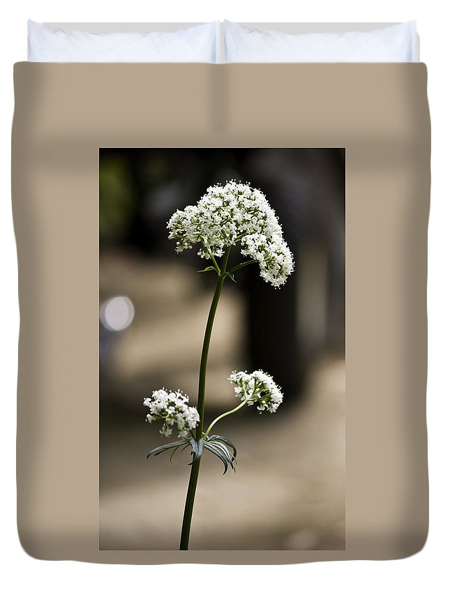 Valerian Duvet Cover featuring the photograph White Valerian by Teresa Mucha