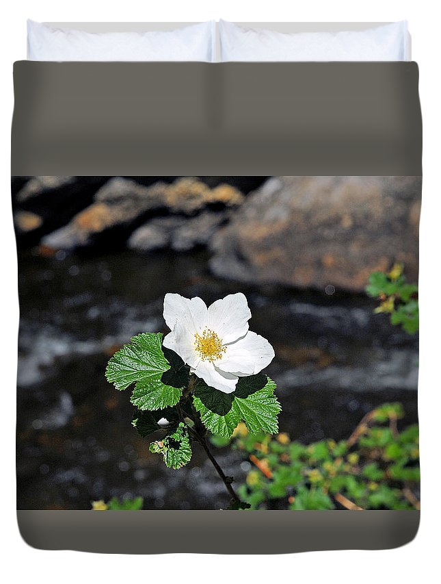Rosa Rugosa Duvet Cover featuring the photograph White Wild Rose In Big Thompson Canyon by Robert Meyers-Lussier