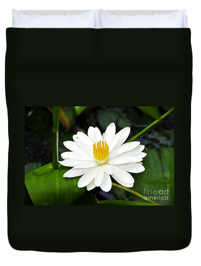White Duvet Cover featuring the photograph White Wonder by David Lee Thompson