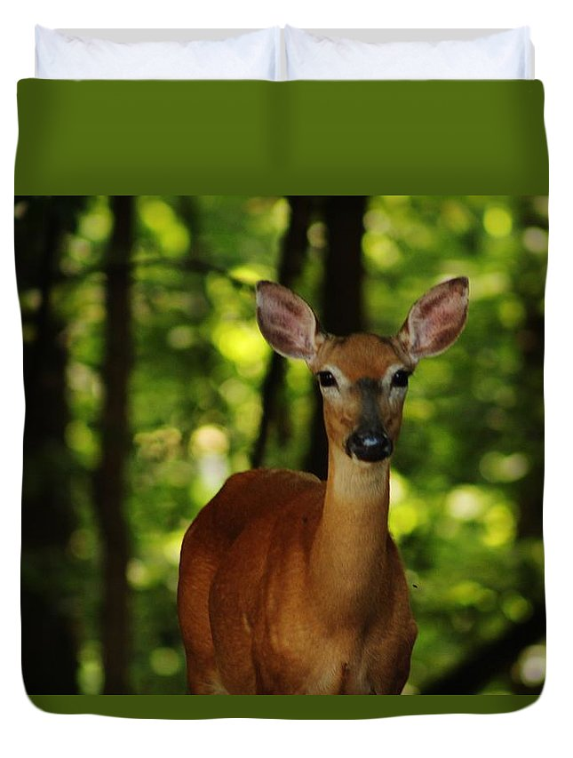 Nature Photography Duvet Cover featuring the photograph Whitetail Doe by Charles Ray