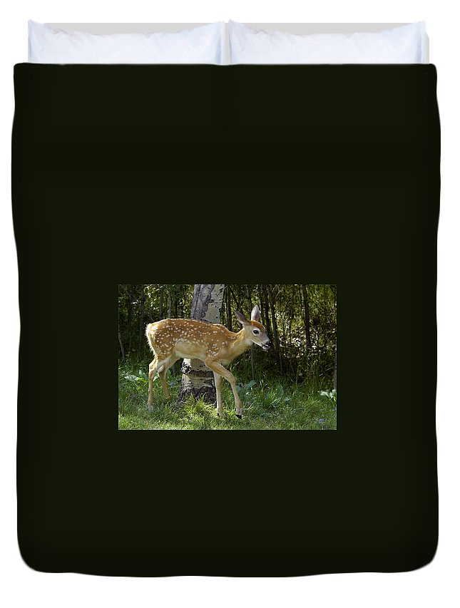 Fawn Duvet Cover featuring the photograph Whitetail Fawn by Gary Beeler