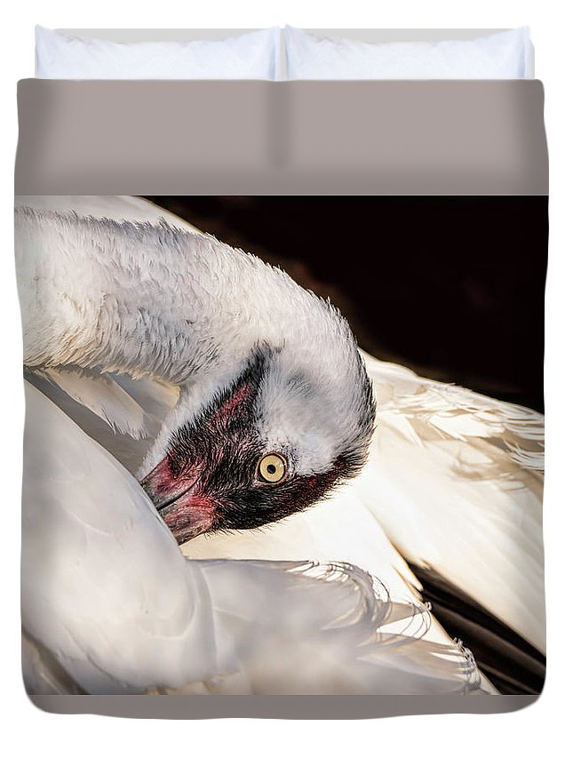 Whooping Duvet Cover featuring the photograph Whooper1 by James Ekstrom