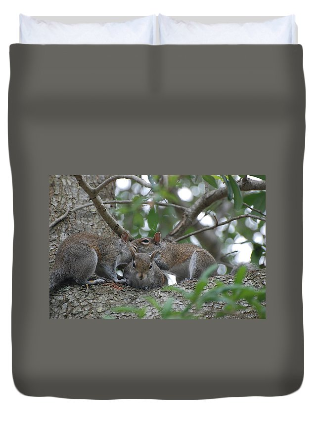 Squirrel Duvet Cover featuring the photograph Why Me by Rob Hans