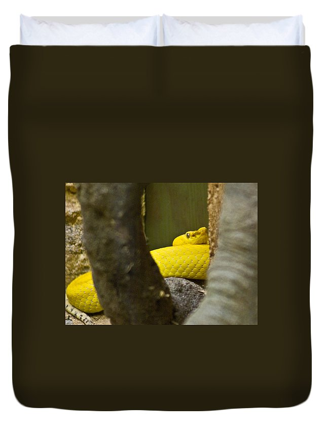 Yellow Duvet Cover featuring the photograph Wicked Snake by Douglas Barnett