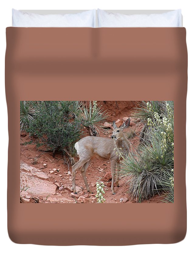 Deers Duvet Cover featuring the photograph Wild and Pretty - Garden of the Gods Colorado Springs by Alexandra Till