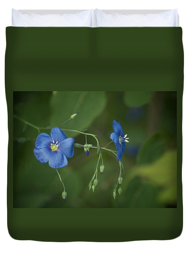 Beautiful Duvet Cover featuring the photograph Wild Blue by Craig Voth