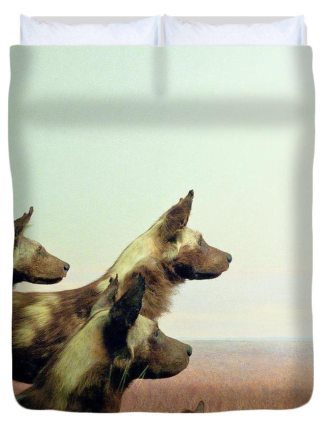 Wild Dog Duvet Cover featuring the photograph Wild Dog by Zena Zero