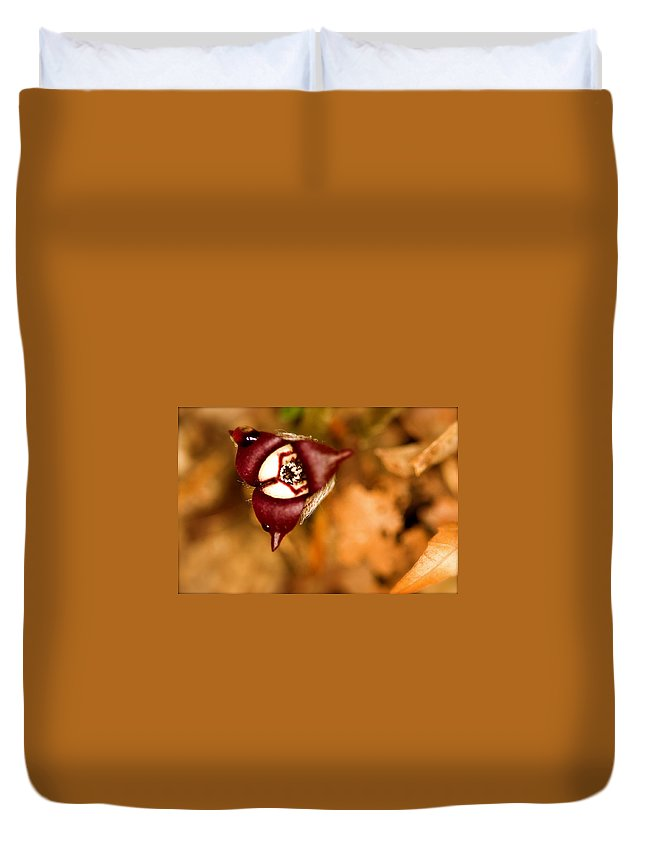 Beautiful Duvet Cover featuring the photograph Wild Ginger by Jack R Perry